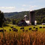 Montpelier Vermont Farm